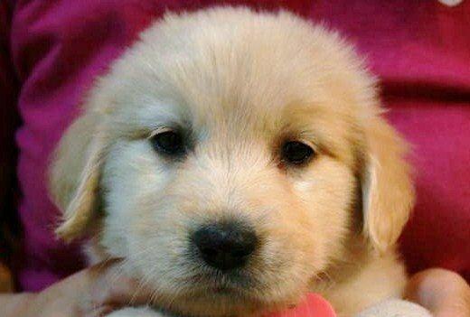 子犬の画像 p1_10