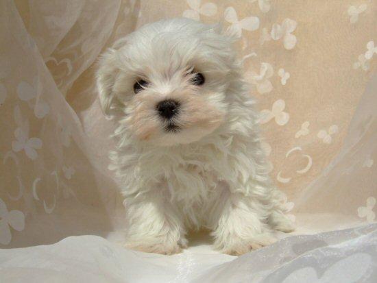 子犬の画像 p1_18